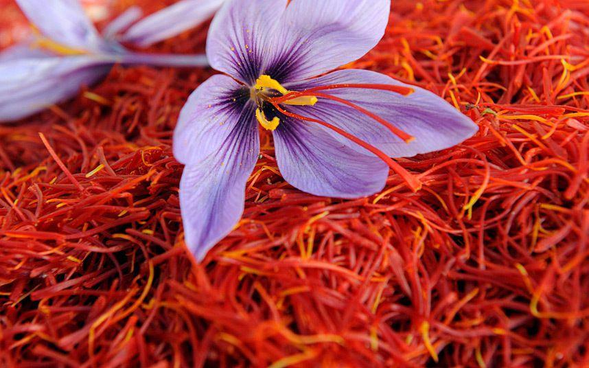 ایجاد شناسنامه برای مزرعه ی زعفران