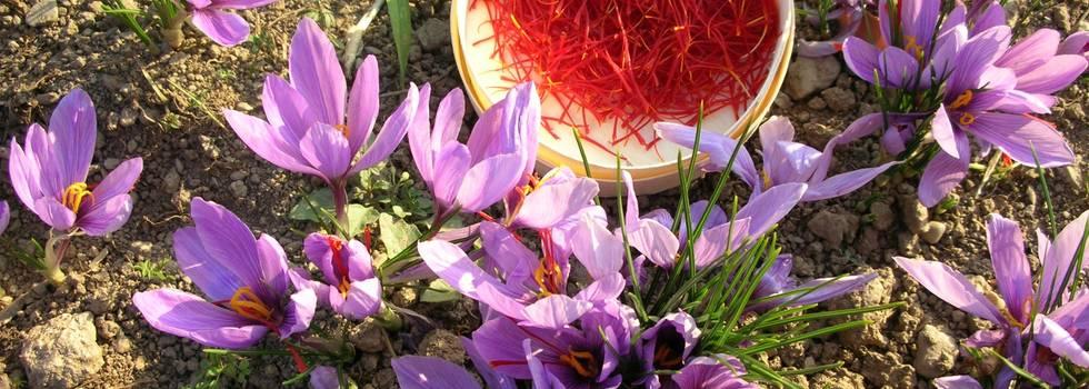 زعفران برای تقویت هوش و حافظه