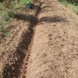 برداشت علف های هرز مزرعه زعفران پس از کاشت و برداشت